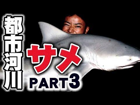都市河川に潜む人食いサメを釣る【PART3】
