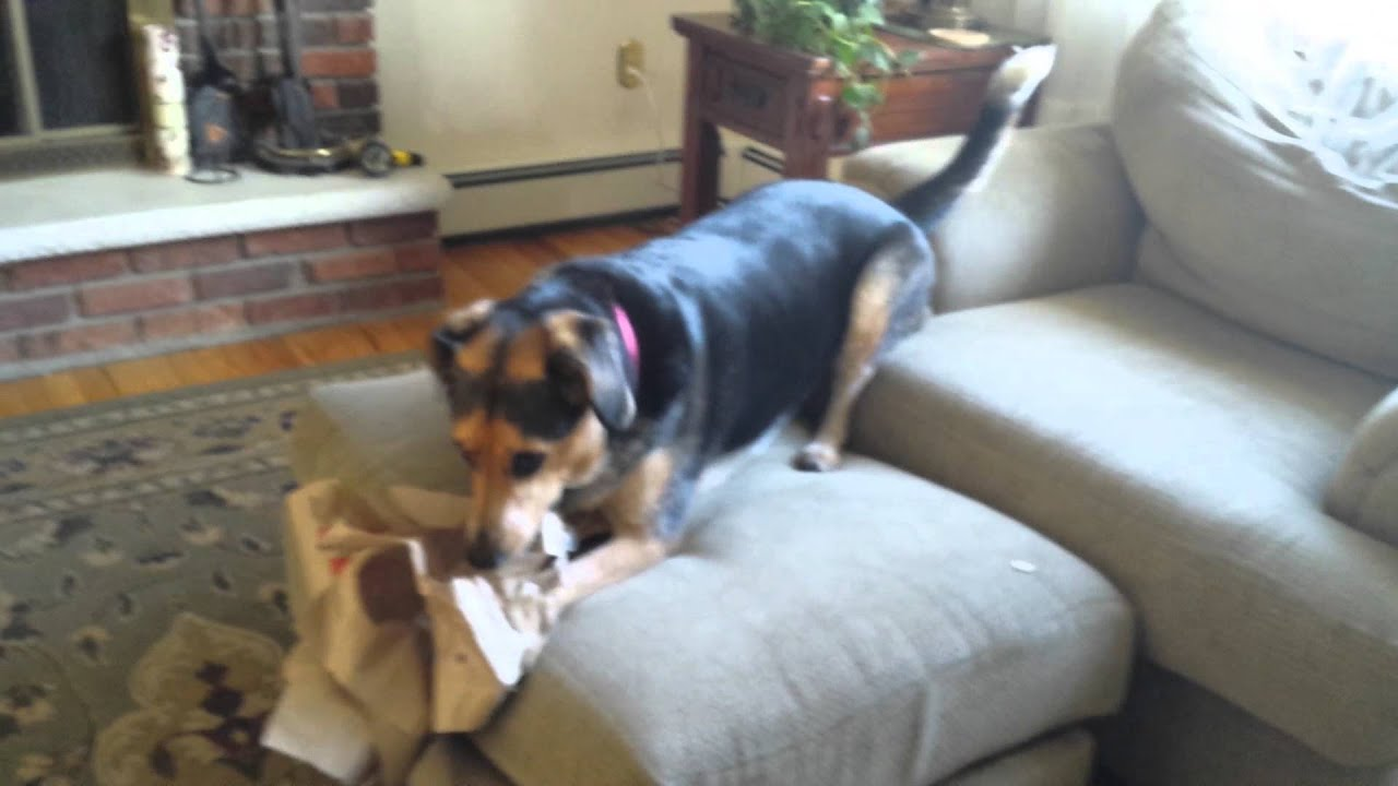 Download Penny Ripping Up Bags