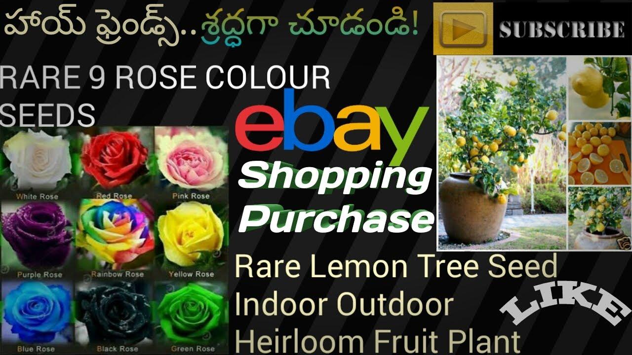 Семена и саженцы цитрусовых. В нашем каталоге вы можете выбрать и купить семена и саженцы. Цитрус лимон вариегата 699 руб смотреть.