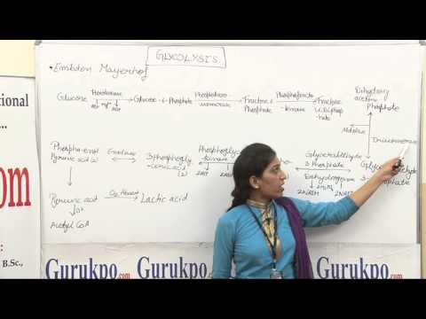 Glycolysis Lecture(B.sc., M.sc) by Priya Rathore