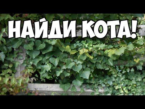 НАЙДИ КОТА (ВКонтакте) ответы на все уровни
