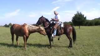 riding mr t with no bit cantering discussing off bit on the bit buddy gets hit part 2 of 3