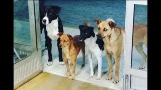 Бездомного положили в больницу – и все его 4 собаки терпеливо ждали его у двери