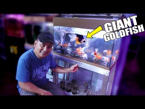 RE-STOCKING MY FISH STORE With GIANT GOLDFISH