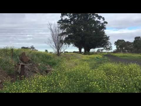 DISAPPEARING: Old South Morang Station
