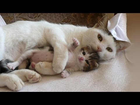 Cat Mom Cuddle With Her Kittens