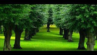 اصوات الطبيعة للاسترخاء والنوم relaxing nature sounds screenshot 4