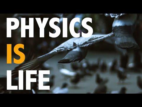 Physics is Life