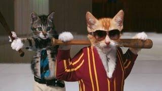 Подборка самых жестких и безкомпромиссных драк котов в интернете 2014  Коты явно бесхозные, грязные,