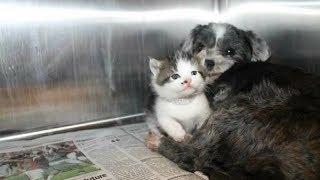Их нашли в глубоком овраге. Собака кормила и защищала брошенного котенка!