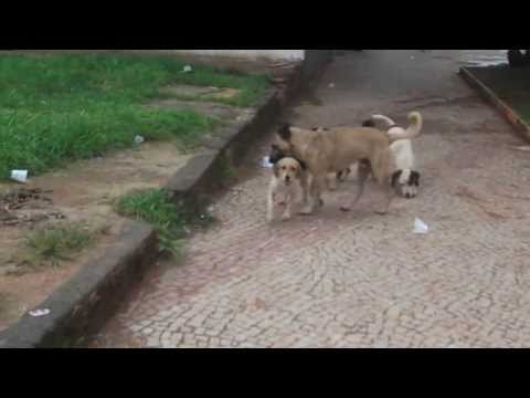 Stray dogs in the town