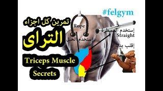 عضلة التراى ، أسرار تمرين و تضخيم عضلة الترايسيبس - تراى | Triceps workout