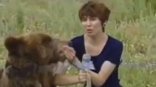 Лев разорвал человека на куски!Нападения животных на людей