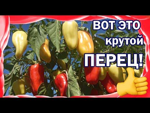 Вопрос: Болгарский перец. Какие сорта можно высаживать уже в феврале 2020?