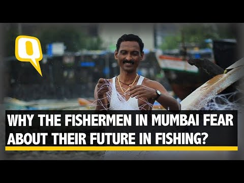 Why Are Fishermen in Mumbai Worried About Their Future?   The Quint