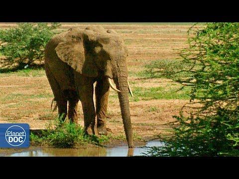 Lake Manyara National Park Tanzania. Part  3