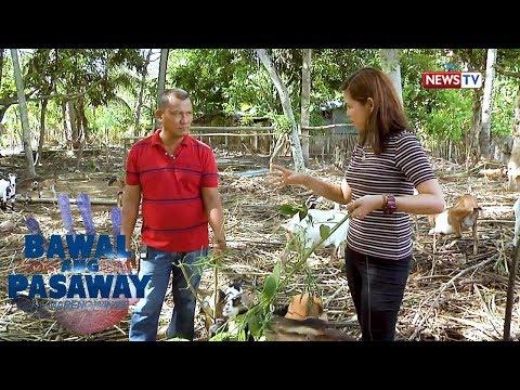 Bawal ang Pasaway: Dating goat farmer, nagwaging mayor sa Narra, Palawan!