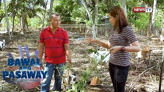 Bawal ang Pasaway: Dating goat farmer, nagwaging mayor sa Narra, Palawan!
