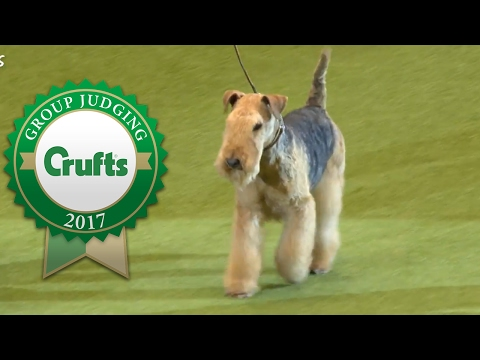 Terrier Group Winner's Interview | Crufts 2017