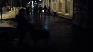 В Жуковском собака несколько часов не выпускала продавца из киоска
