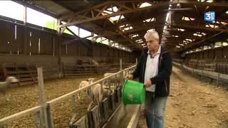 Agriculture : le mouton n'a pas la cote en Haute-Normandie