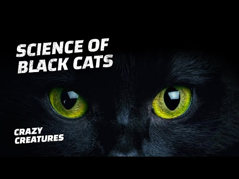 The Science Behind Black Cats