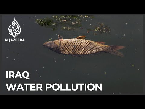 Sewage in Iraq waters: Pollution blamed for killing thousands of fish