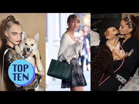 Top 10 Cutest Celebrity Pets