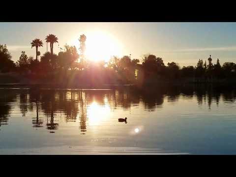 Duck Diving in Lake - Arizona