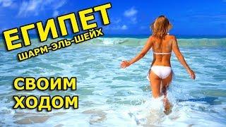 как попасть в Египет шарм эль шейх из России через Белоруссию ( домина корал бей гарем ) 2019