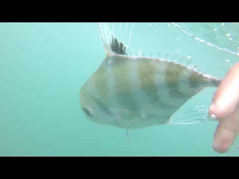 Saltwater Fishing In Hawaii - Whipping - Plugging - GT Fishing - Kagami