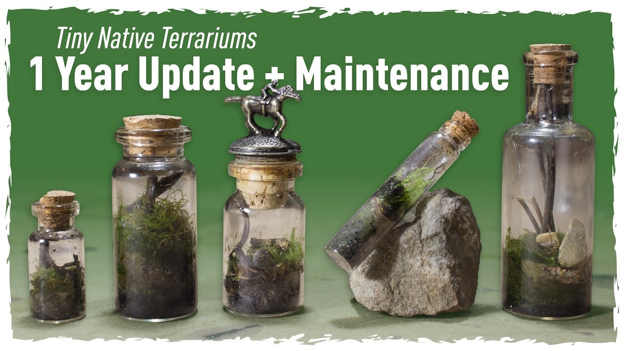 Tiny Native Terrariums 1 Year Update Maintenance Youtube