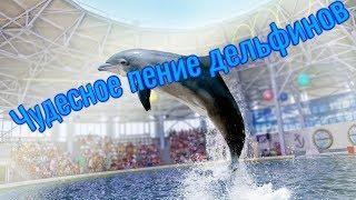 Дельфины Дельфинарий в Евпатории Пение дельфинов ❤Любимый Крым❤