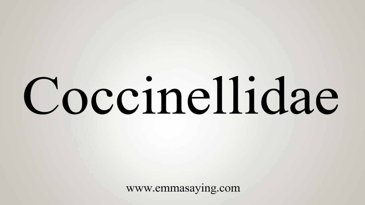 How To Say Coccinellidae