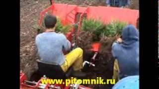 выращивание новогодних елок  http://pitomnik.ru