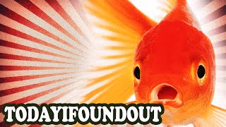 Why You Should Never Leave a Goldfish in a Small Fish Bowl Alone