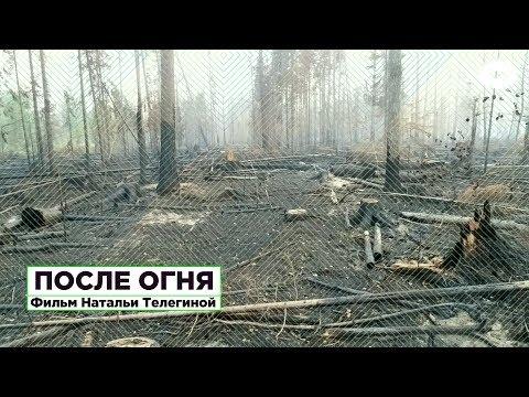 После огня. Фильм-расследование о причинах аномальных пожаров в сибирской тайге | ROMB