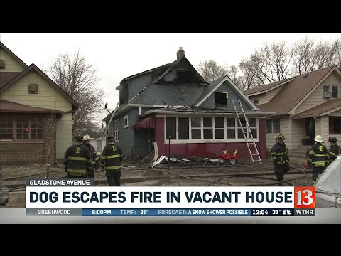 Dog Escapes House Fire