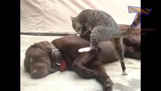 Khi Những Chú Chó Bị Mèo Troll