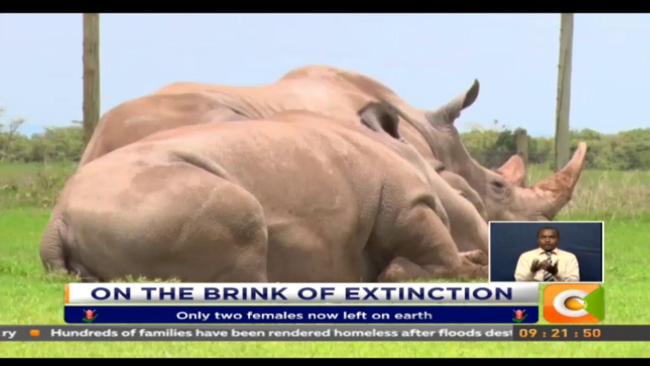 Last male of Northern White Rhino dies in Kenya