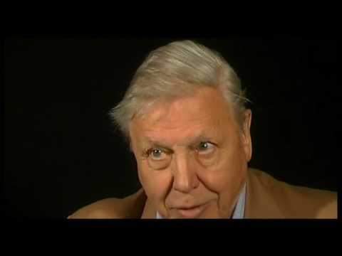BBC Kenneth Clark's Civilisation   14 Extra   David Attenborough Interview