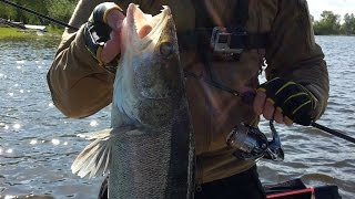 Predator fishing diary #1 (part 2 of 2) Testing Shimano Stella 14 2500s & Shimano Twin Power 15