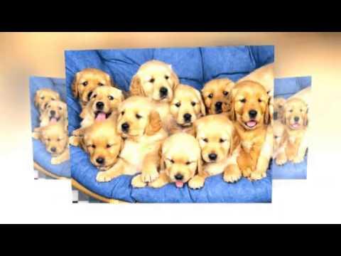 House Sitting & Pet Sitters Australia