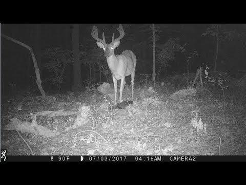 Trail Cameras July 1st in Eastern Arkansas - Nice Bucks