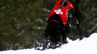 Aspen Avalanche Rescue Dogs - Charlie Kinross London HD Cameraman & Director
