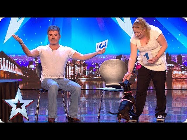 Meet Tilly The World S Most Intelligent Dog Auditions Week 1 Britain S Got More Talent 2018