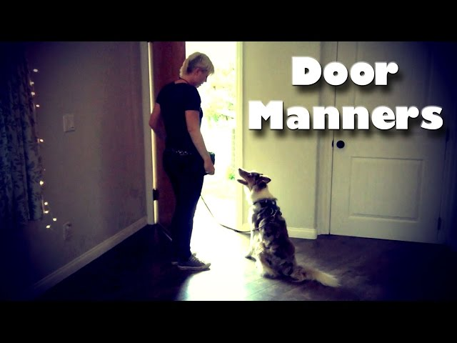Door Manners - Dog Training