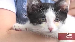 В Саранске появились мошенники, которые ходят по организациям и просят деньги для собак и кошек