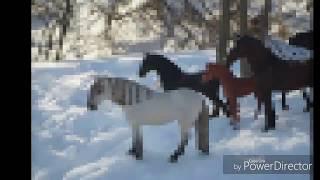 Реалистичные фото лошадей шляйх, коллекта, моджо 2017( смотри описаниe)