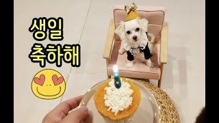 나의 사랑하는 강아지 생일잔치